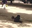 Champs de Mars, luogo di incontro di persone e … animali
