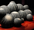Canape Cactus di Maurizio Galante per Cerruti Baleri. Ph. Silvia Dogliani