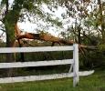 Trees snapped like twigs, Alabama, May 2011 Ph. Amanda Dunn