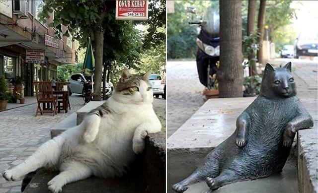 Tobili, celebre gatto ad Istanbul, Turchia. Foto presa da Facebook